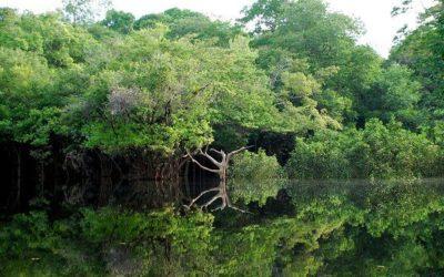 La langue cachée d'Amazonie